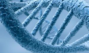 Caracterización genética